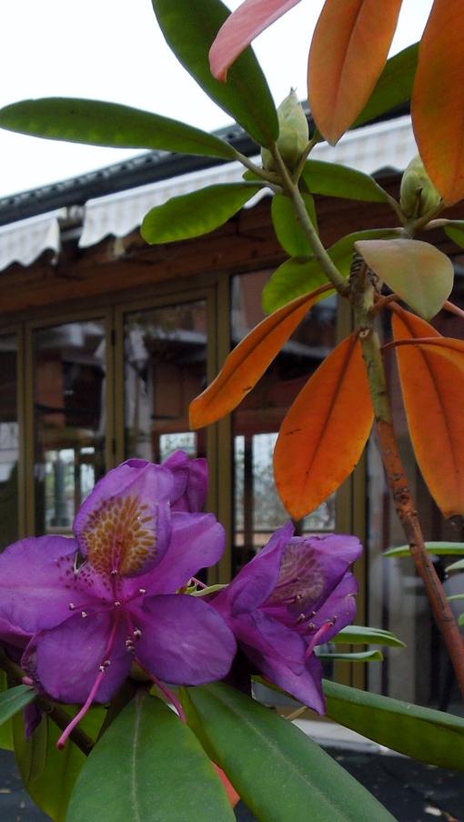 flori spectaculoase